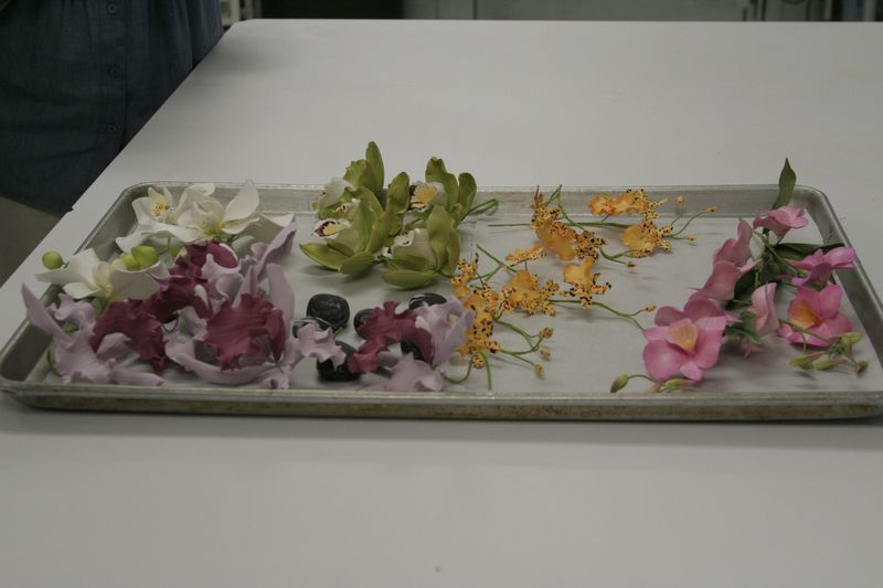 Tray of orchids2