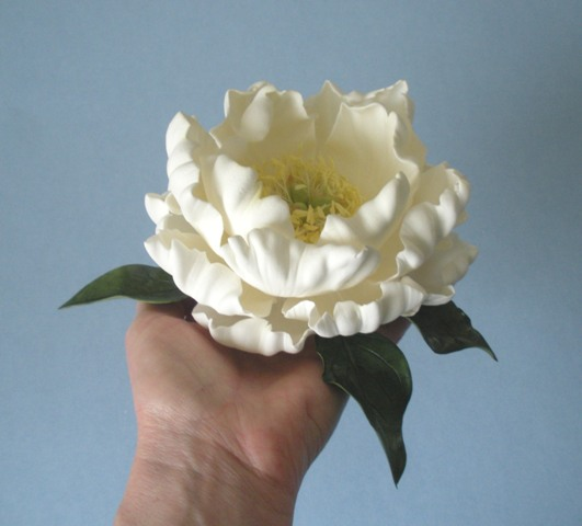 White peony in hand side view 2